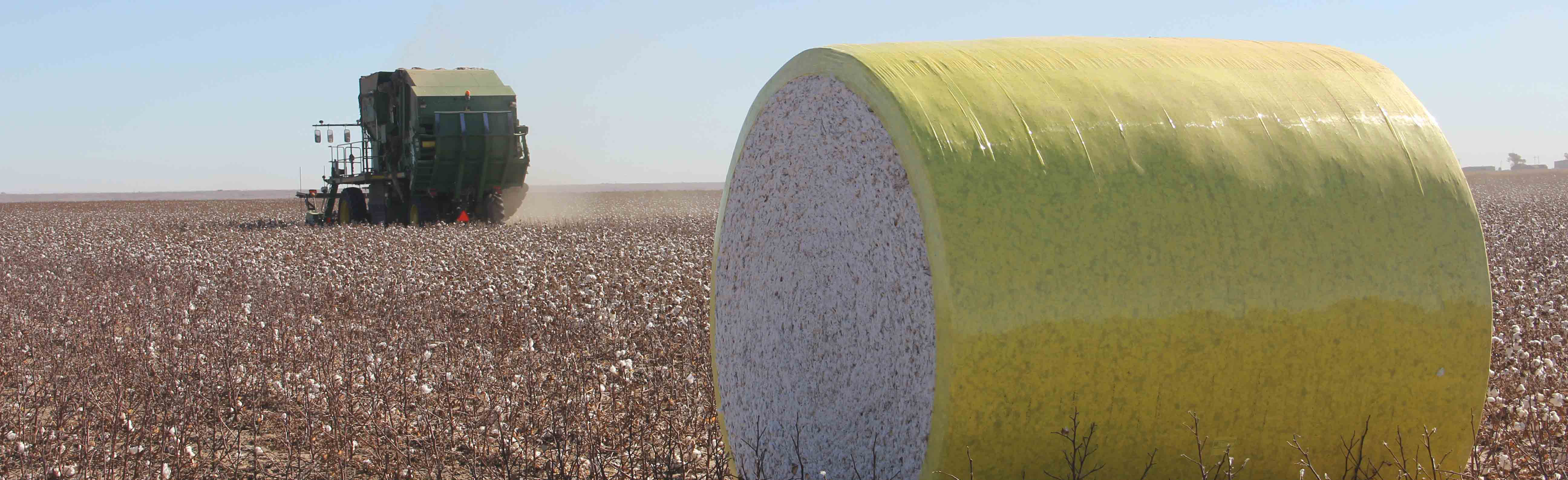 Kansas Cotton Harvest