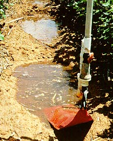 Lepa Irrigation