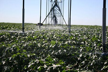 Cotton Irrigation