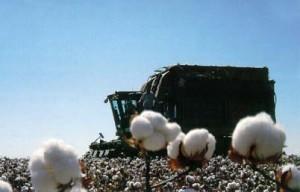 Braden Harvest