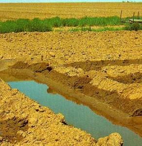Ditch Irrigation