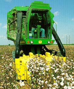 South Texas Harvest